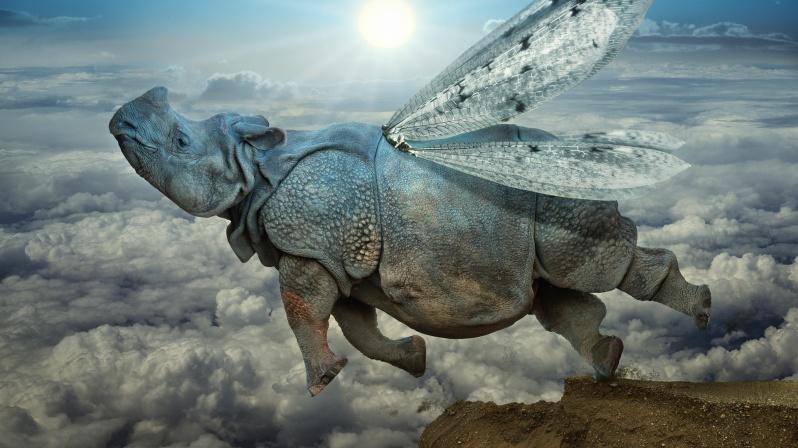 носорог летит